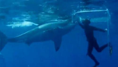 真的好奇妙20151115期:超级大白鲨